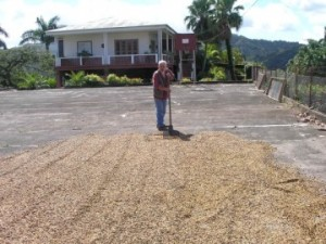Coffee Bean Locations: Puerto Rico - Man next to street filled coffee beans