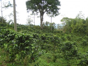 Coffee Bean Locations: A coffee farm in Colombia